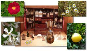 Hausapotheke - ätherische Öle
